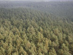 Polskie lasy w czołówce