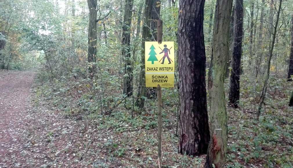zakaz wstepu do lasu