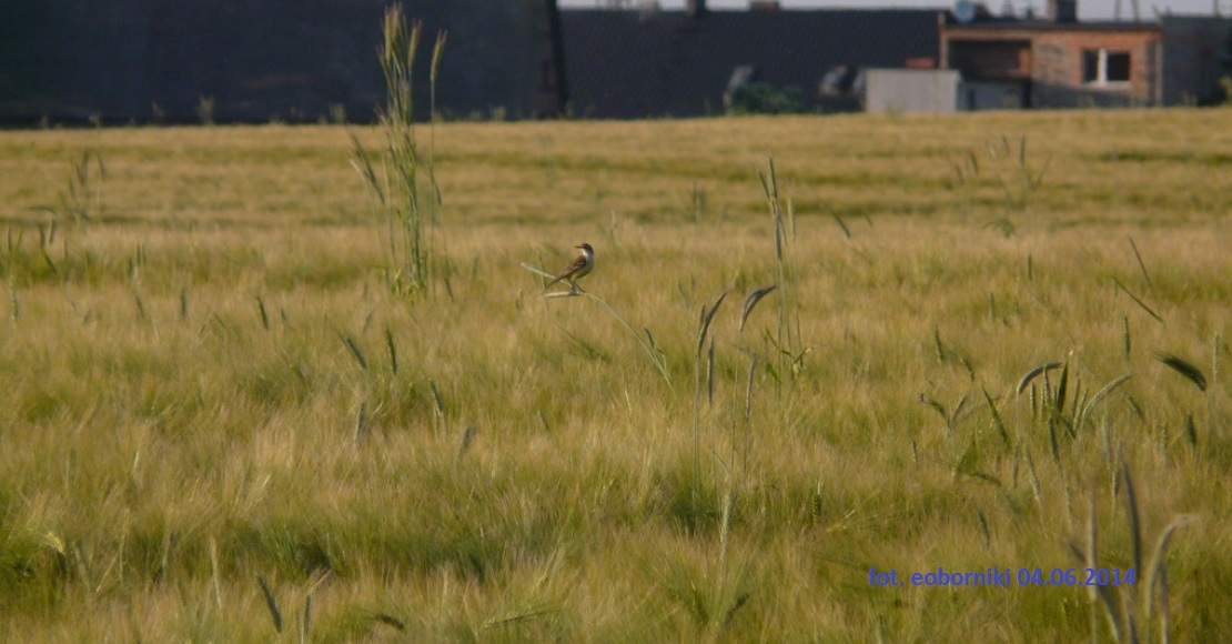 Nadal nie jest rozstrzygnięty przetarg na grunty rolne w okolicy Objezierza