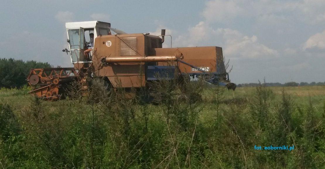 8 przetargów na grunty rolne w okolicy Objezierza rozstrzygnięto