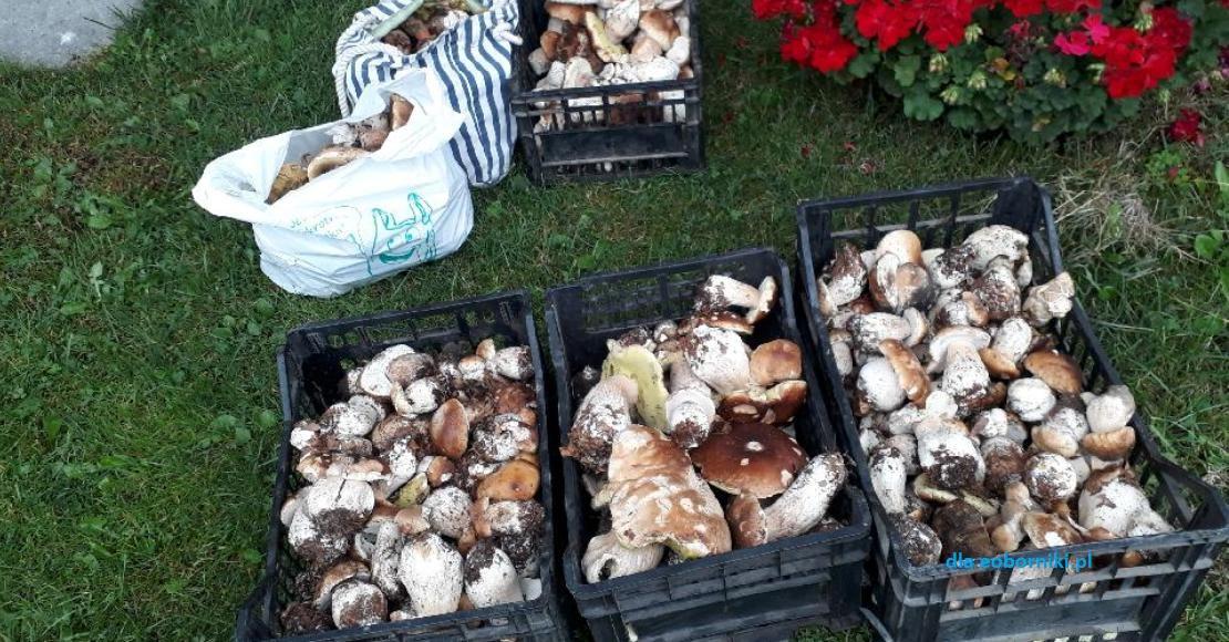 Praktyczne porady przed wyprawą na grzyby