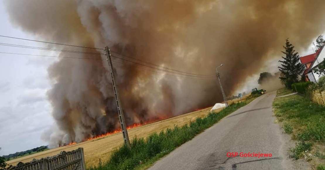 Pożar zboża w Gościejewie (foto)