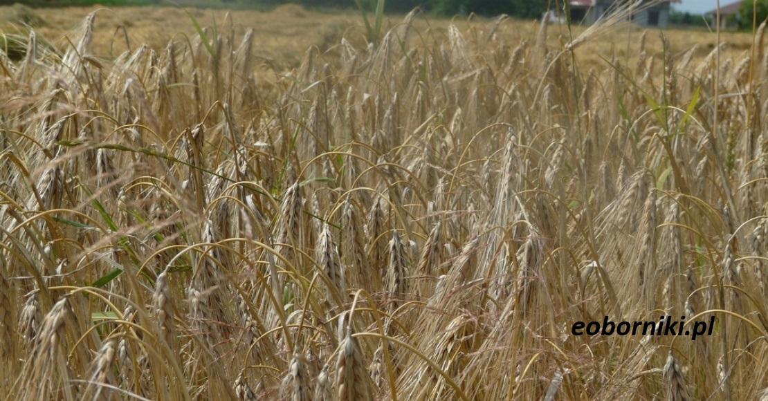 Zapraszamy na spotkanie producentów rolnych