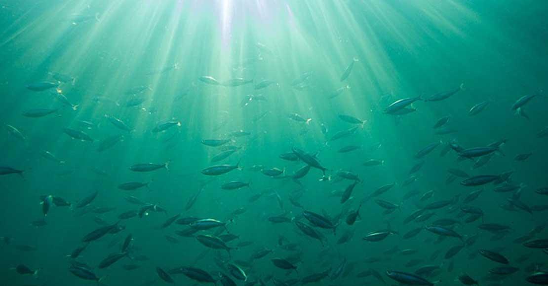 Jakie zdrowotne skarby ukryte są pod wodą?