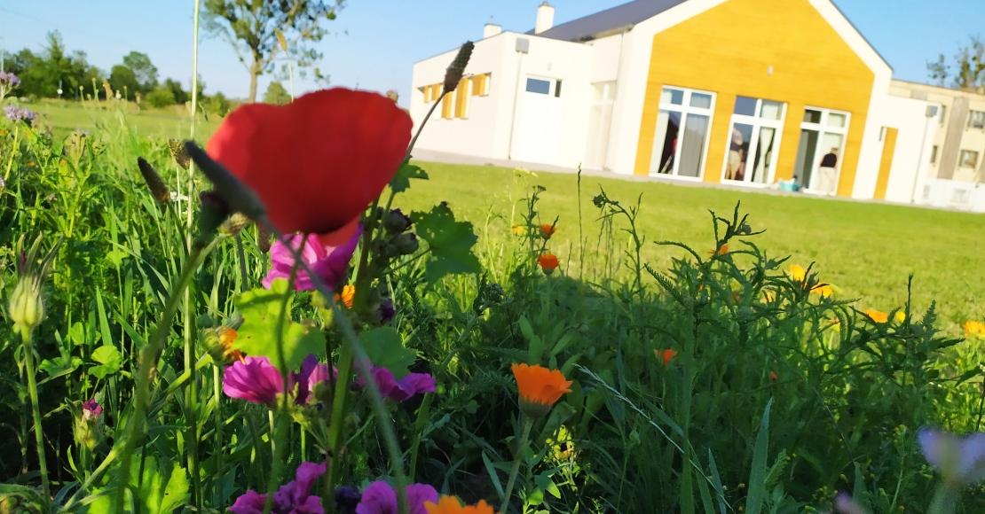 Łąka kwietna w Ocieszynie (foto)