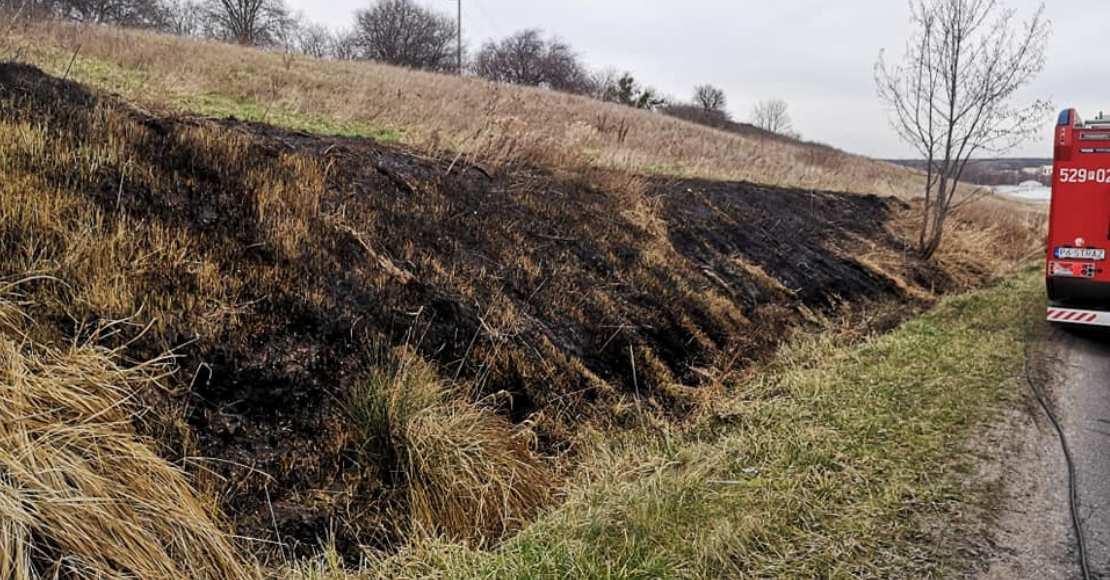 Pożar trawy w Uścikowie Folwark