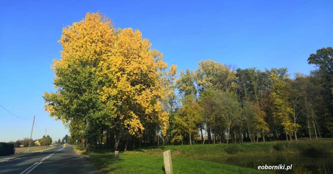 Prognoza pogody na niedzielę i drugą połowę listopada