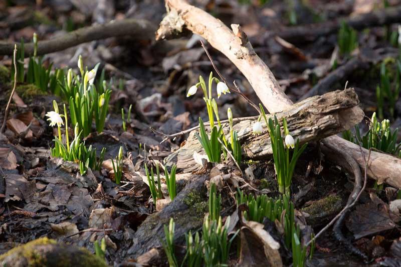sniezycowy jar 3