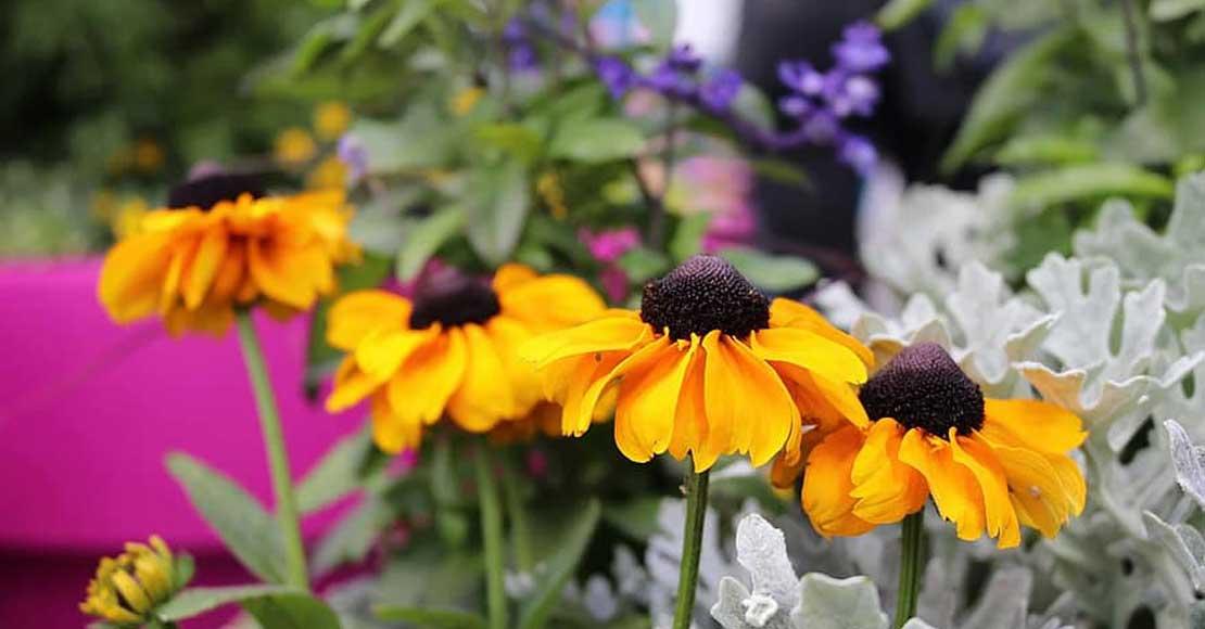 Zakładanie ogrodu - jak to zrobić, by nie żałować?