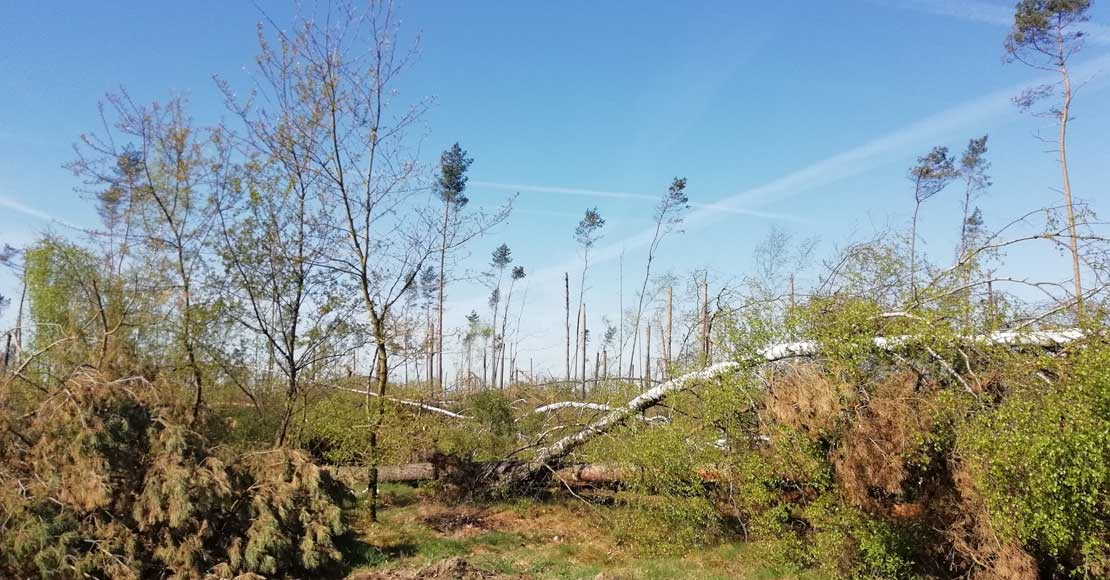 Z powodu suszy zamiera 285 tys hektarów lasów.