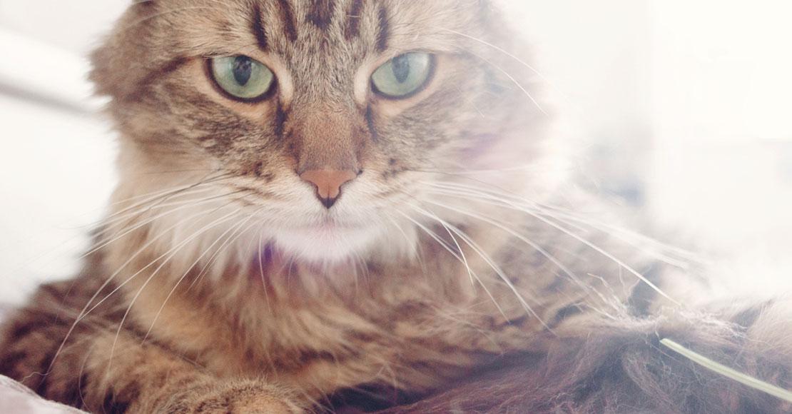 Karmienie małego kota – czym go karmić i jak często?