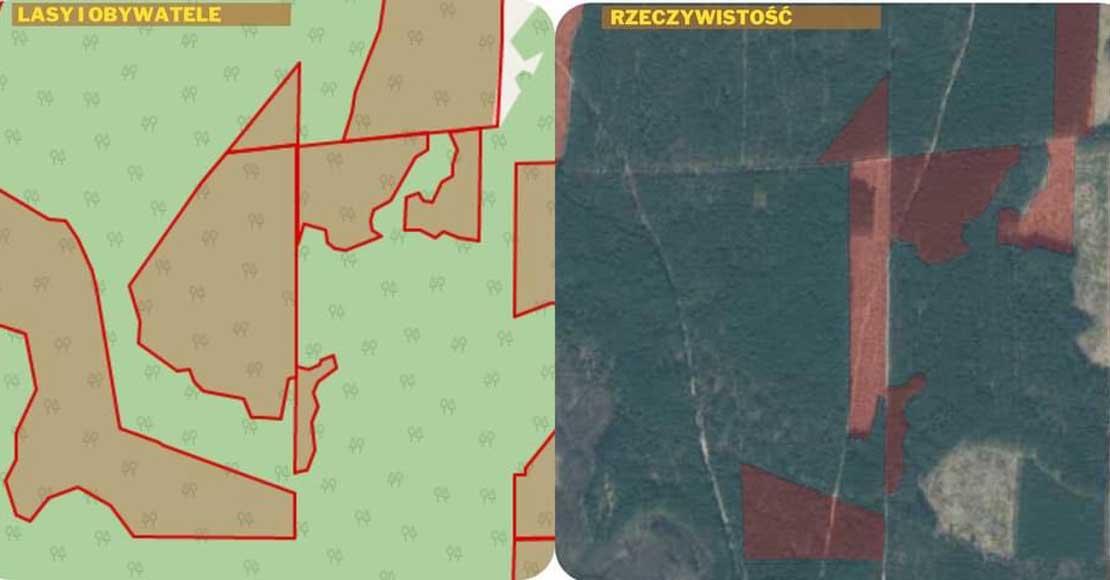 """Aktywiści stworzyli mapę wieszcząc apokalipsę w lasach – Leśnicy: """"mapa wprowadza w błąd!""""."""