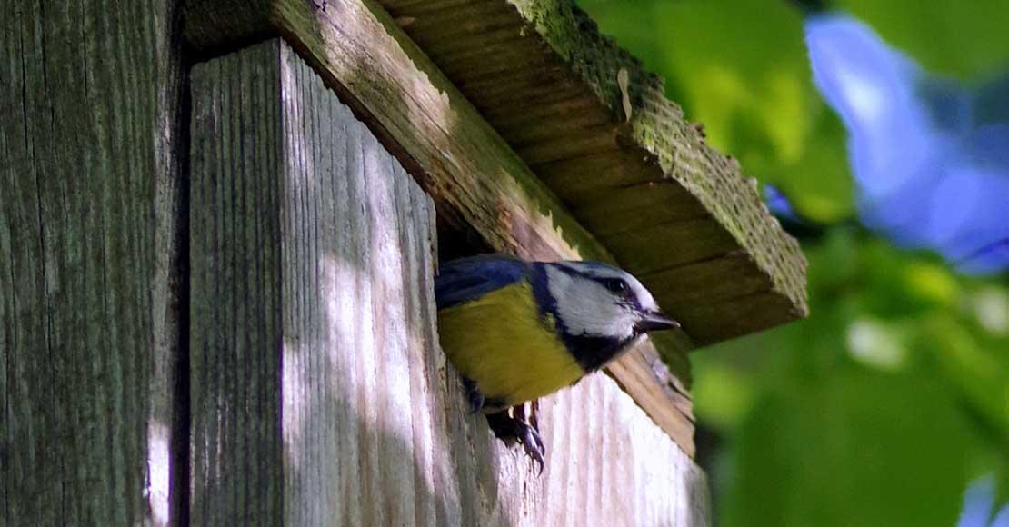 Wieszamy budki lęgowe dla ptaków