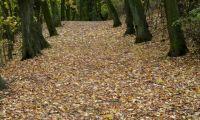 Kalwaria obornicka w jesiennej scenerii (foto)