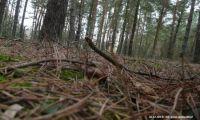 A może spacer po lesie?