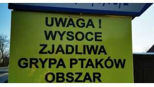 foto: mojewronki.pl